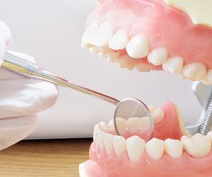全体として機能する1本1本の歯の役割を大切にする